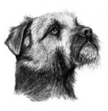 Border Terrier Personalised Correspondence Cards with Envelopes